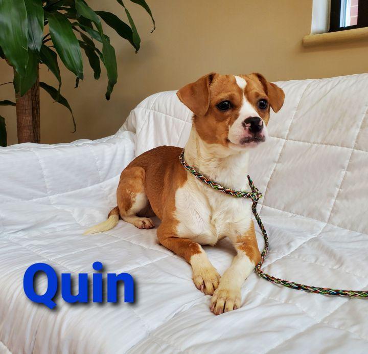 Quin 1