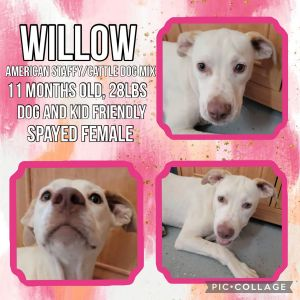 Meet Willow a 11 month old 28lb Amstaff mix Willow is great with all people and dogs She can co