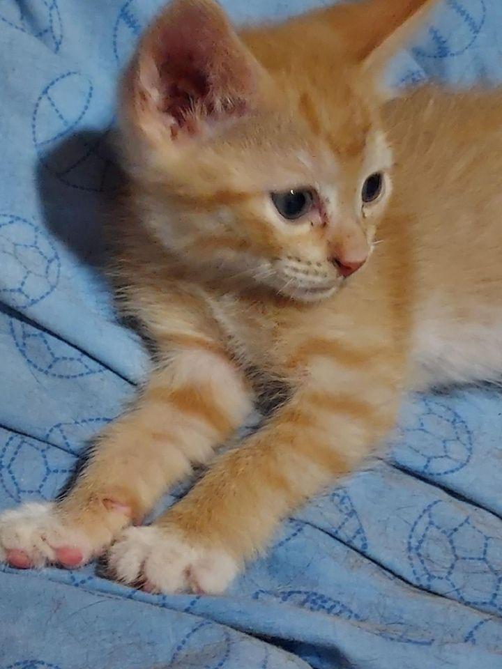 Kung Foo Kitty 2
