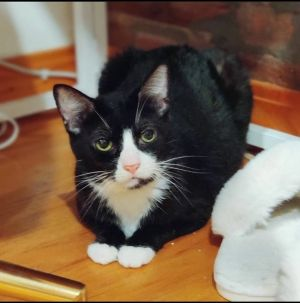 Socrates Foster Writes Socrates is a quiet and shy cat who likes her space to be respected just l