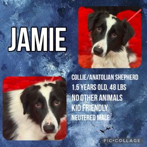 Meet Jamie he was brought to the shelter in Kabul Afghanistan as a very young puppy with his 2 sib