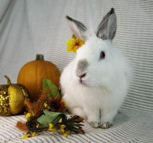 JULY Bunny Rabbit Rabbit