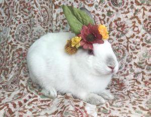 MAY Bunny Rabbit Rabbit