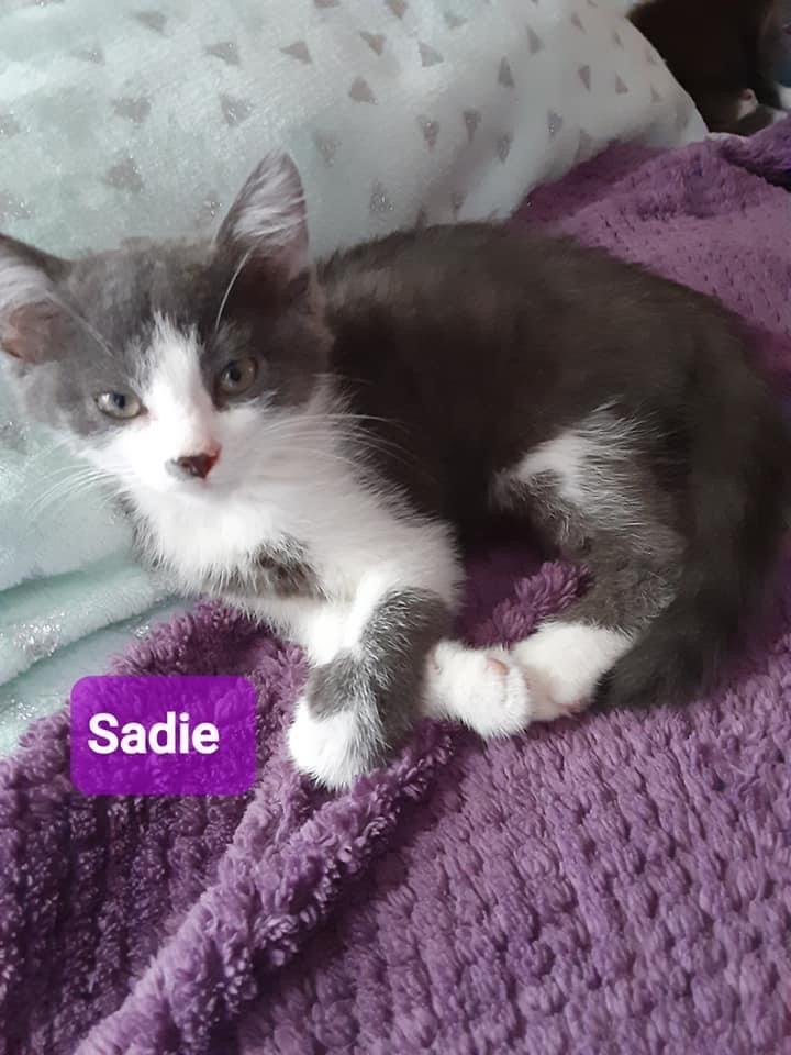 Sunny sparkle Sadie  2