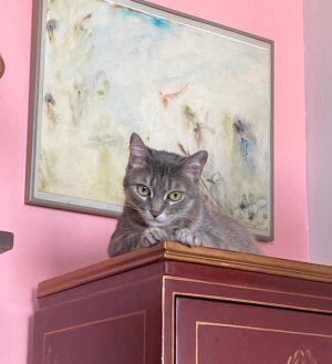 RUBY Tabby Cat