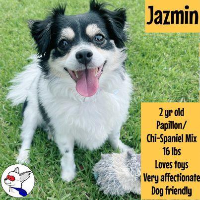 Jazmin detail page