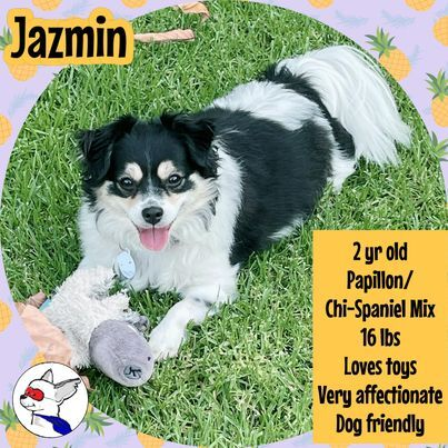 Jazmin 2