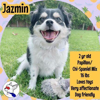 Jazmin 3