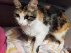 I1353833 Domestic Medium Hair Cat