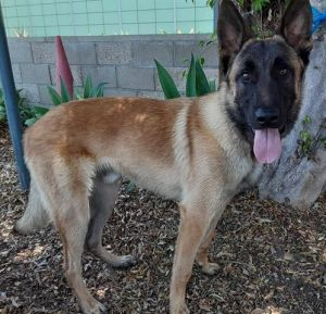 CALVIN Mixed Breed Dog