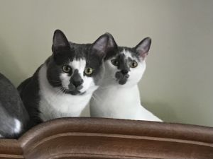 Vinny & Betty - sweet bonded pair
