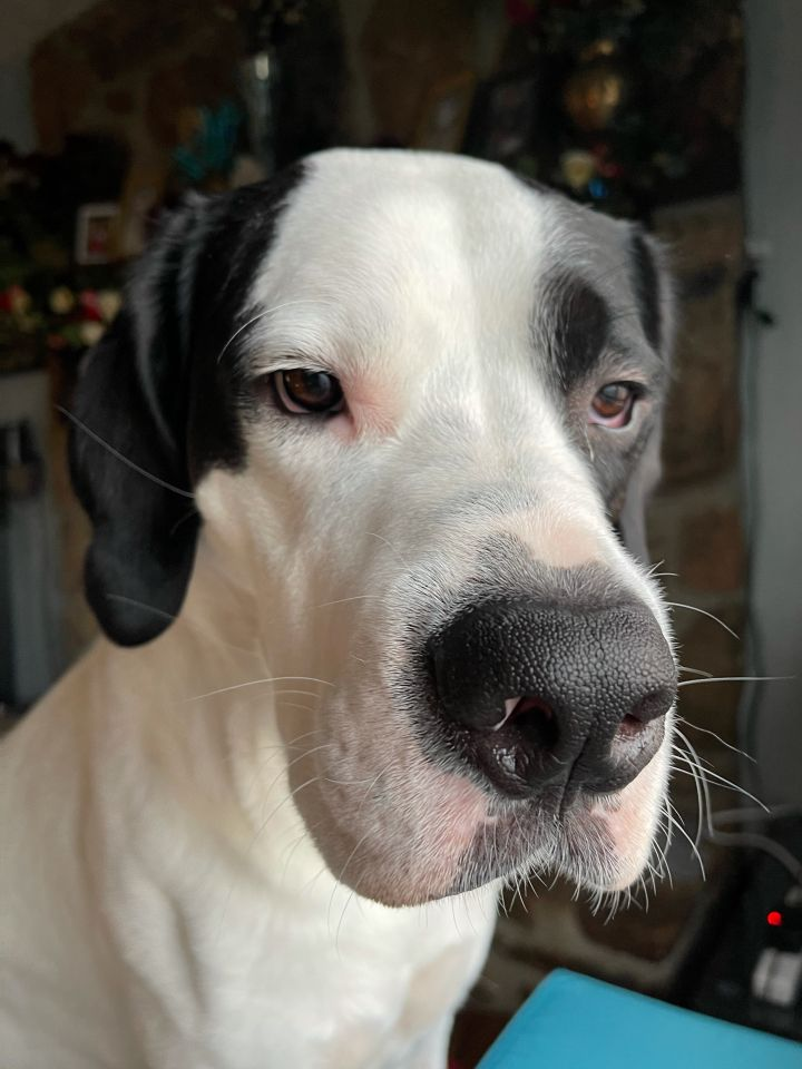 **GUEST DOG** - Oreo 1