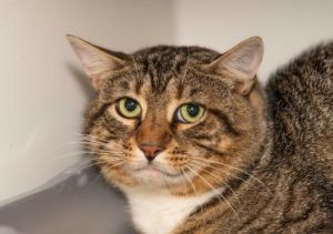 Jeter is very shy but is food motivated and always enjoys getting a treat He was found outside of