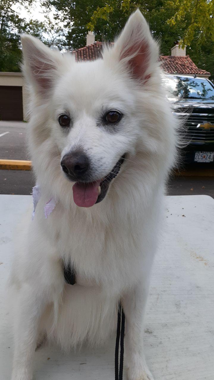 Princess-Adopted! 1