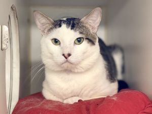 I have lived with cats I am looking for a home with a patient person Im sensitive and shy Ill