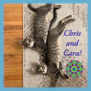 Cara and Christopher are 2 of the sweetest  most gentle  playful  healthy babies looking for thei