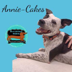 Annie-Cakes