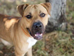 APOLLO Mixed Breed Dog
