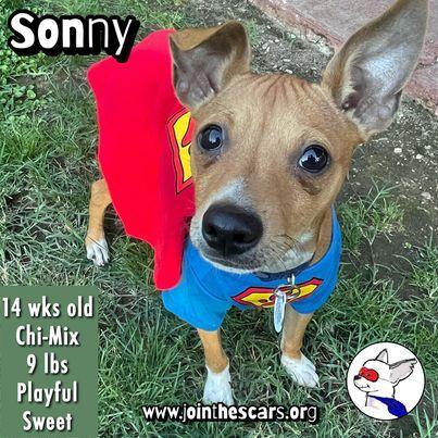 Sonny 1