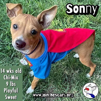 Sonny 4