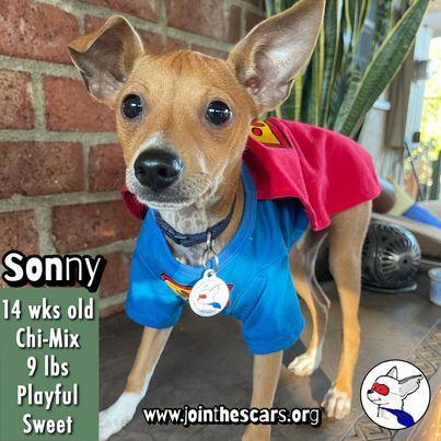Sonny 5