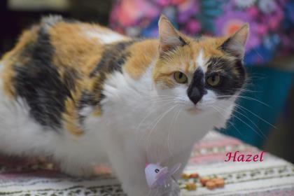 Hazel 2