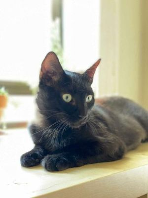 Cupcake is an adorable 2 year old girl looking for her forever home she is incr