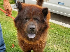 I WAS FOUND AT 3000 BLK LOS COYOTES DIAG LB 90815 IN LONG BEACHMy adoption evaluation date is 080