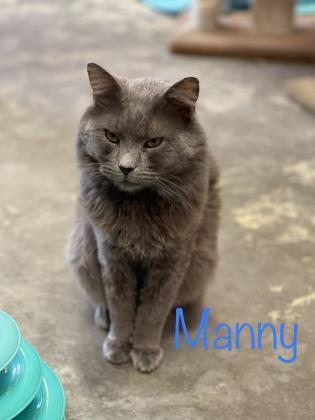 Manny 3