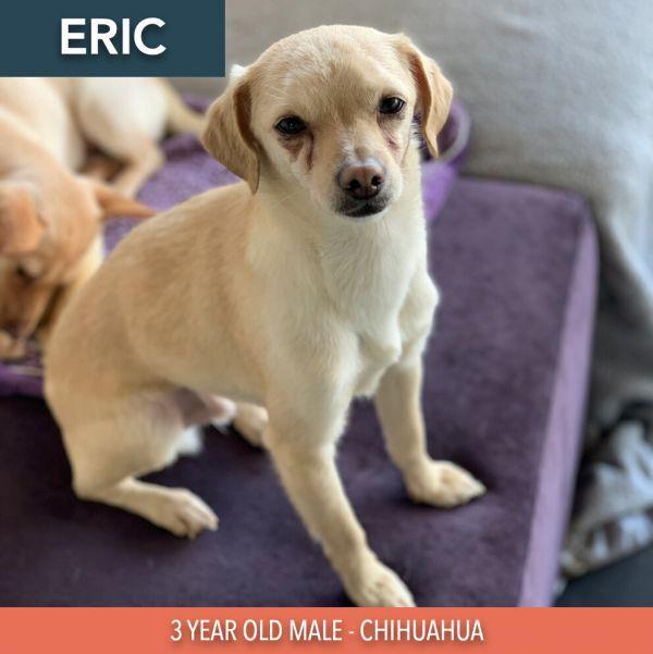 Eric 4