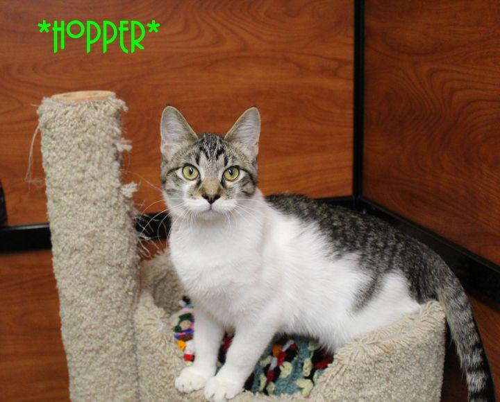 Hopper 2