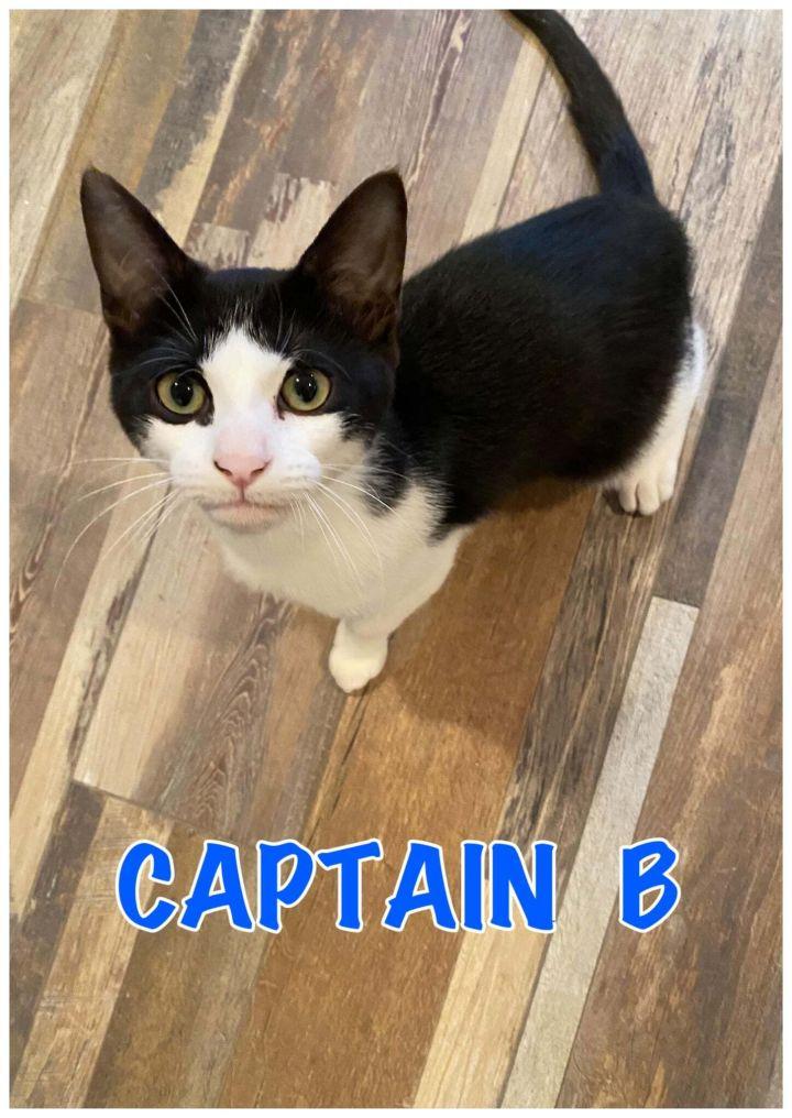 Captain B 1