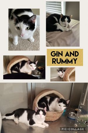 Gin and Rummy
