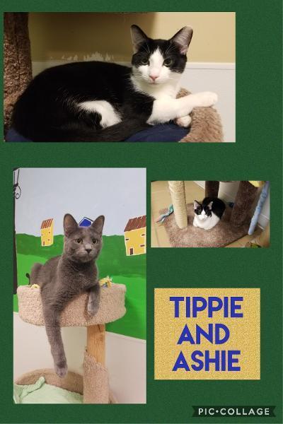 Tippie and AShie
