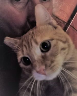 Katie is approximately 15 months old She is spayed vaccinated and tested negative for FIV and FeLV