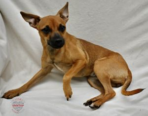Hi meet Poppy Poppy is a lovable 3 year old Miniature Pinscher mix Poppy is full of love and just