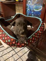 Meet Blossom one of a litter of 8 puppies found in the middle of the road one night A finder