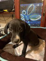 Meet Brock one of a litter of 8 puppies found in the middle of the road one night A finder