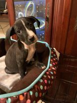 Meet Benson one of a litter of 8 puppies found in the middle of the road one night A finder