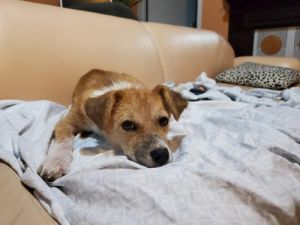 You can fill out an adoption application online on our official websiteRosey AL is a female Beagl