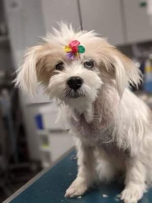 You can fill out an adoption application online on our official website Cleo SC is a spayed femal