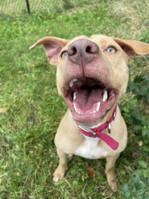 Very sweet year old dog around 40 lbs loves everything and wants to play with everyone Came to the