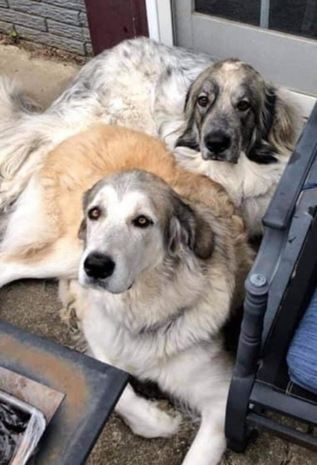 Duke and Stella  4