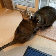 Mama & Peanut (Bonded Pair)