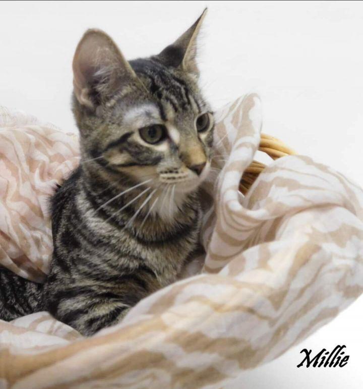Millie 5