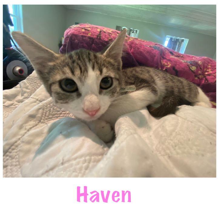 Haven 1