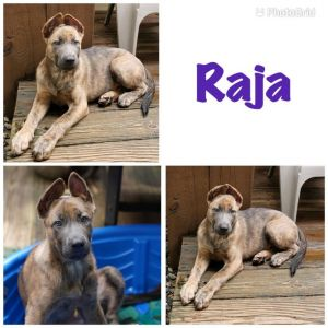 Raja is ready to start the search for her perfect forever home Raja is cuddly and people oriented