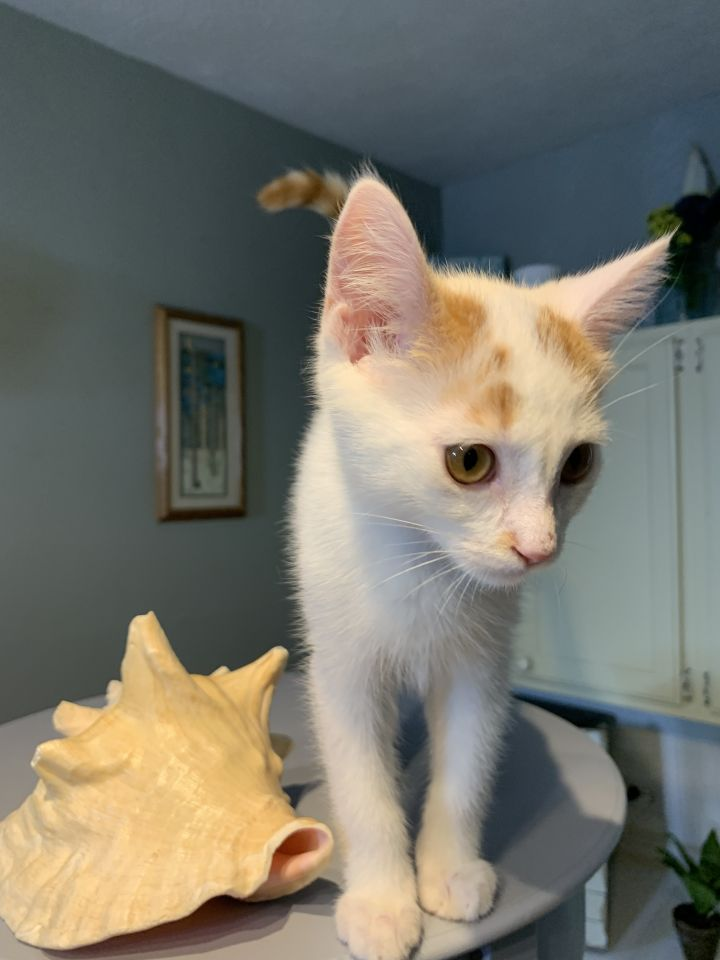 Finch (bonded with brother wren)  3