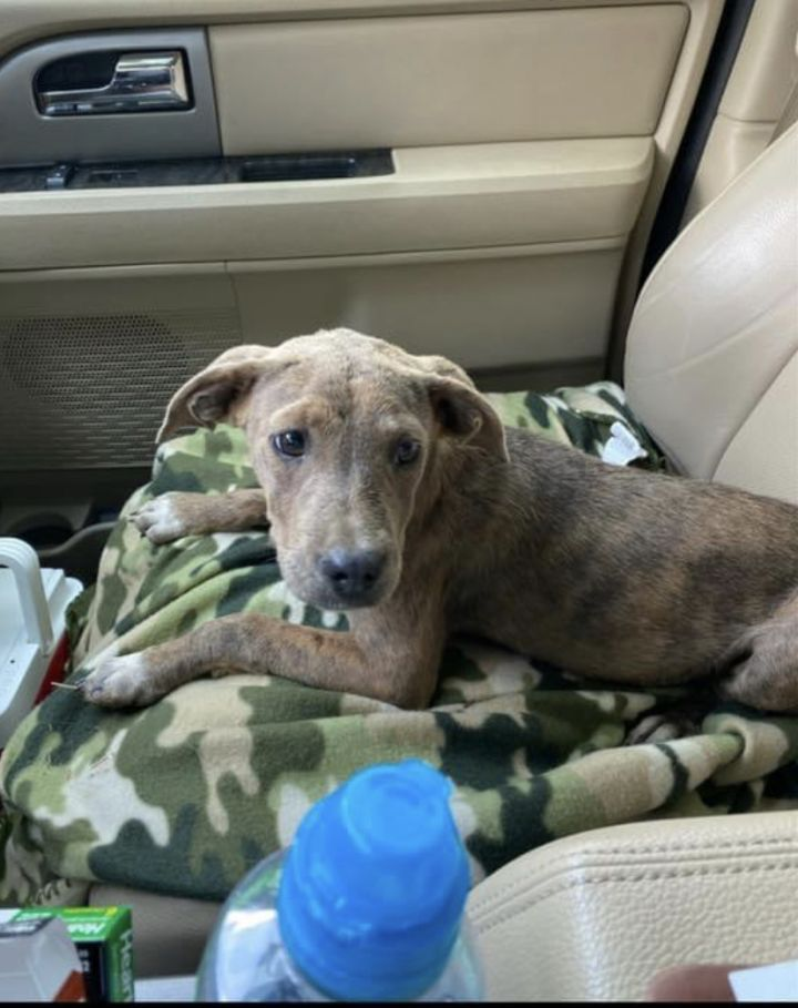Sheba - Fostered in CT 4