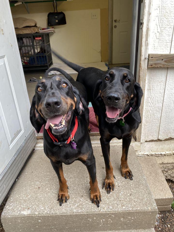 Annie + Oakley 4